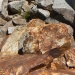 These little pika was hanging out in the scree right by the wooden Ansel Adams wilderness sign