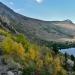 Fall Colors in the Aspens near Silver Lake