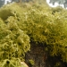 The moss seems happier in the damp