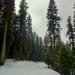 Foggy Ski
