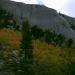 Aspens on the trail leading to Rosalie  Leke