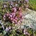 Flowers in bloom, Late June