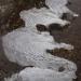 Tioga Snow