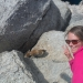 These marmots were very persistent