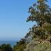 Mcway Falls Trail