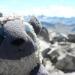 Sheep selfie