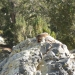 Marmot sunning themselves. Marmots know what is up.