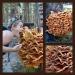 Fungi - so appetizing