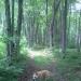 Negwegon Algonquin Trail