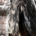 Pioneer Cabin Tree Fire Scar