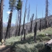 Trail past the burned area outside of Mono Meadow