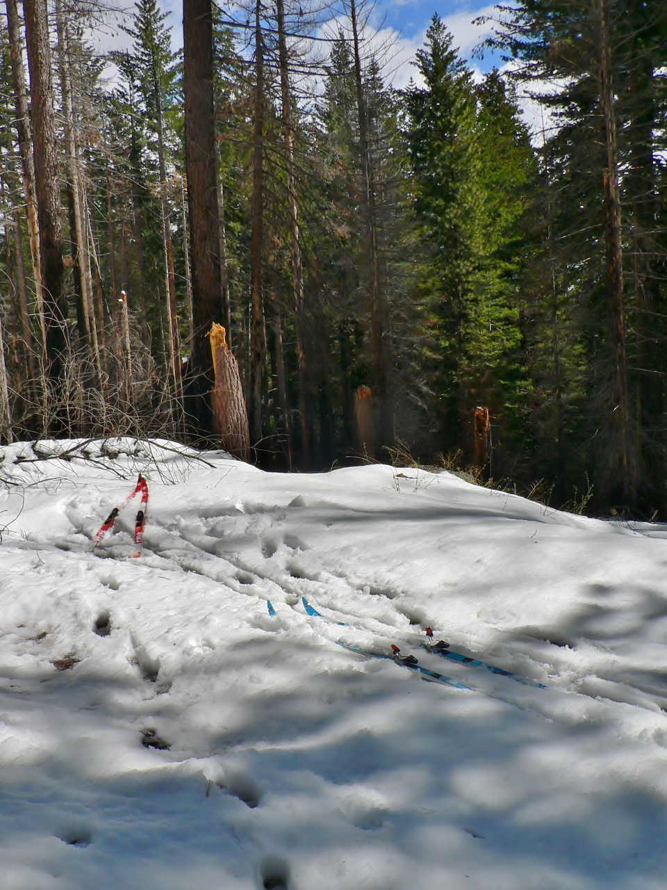 Rockefeller Grove Yosemite Sugar Pines Skiing Amp Fire