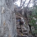 Stairs from the trail are still in good shape once you get past the boulder field.
