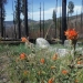 wildflowers lining the fire perimeter