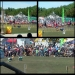 Stunt Dog Show
