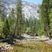 Tuolumne River near Pate Valley