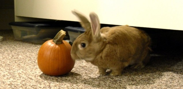 Hoppy Halloween!
