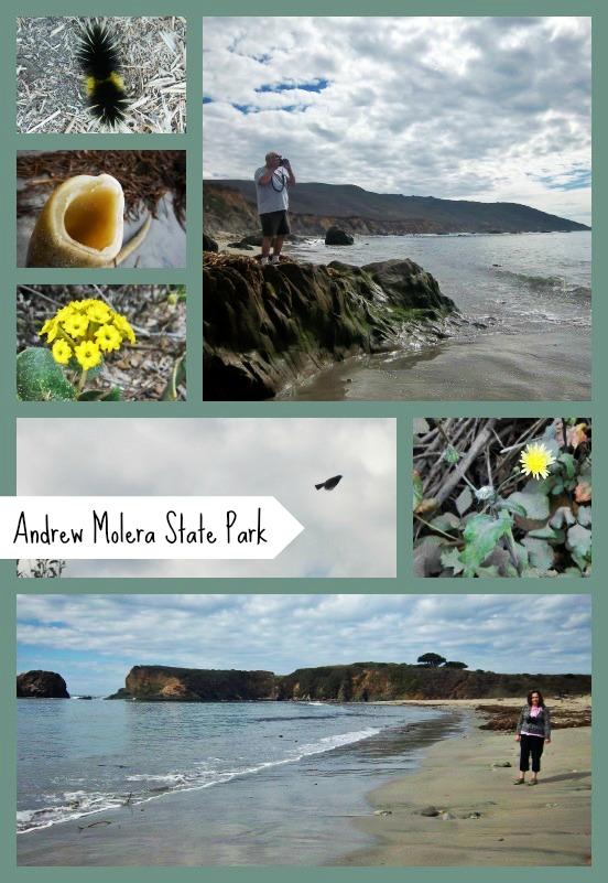 Beach Trail, Andrew Molera State Park