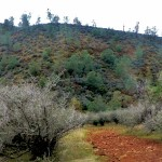 Red Hills CA