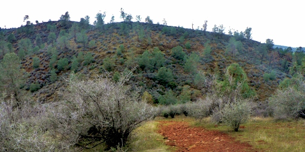 Red Hills CA - Hiking the Overlook Loop Trail