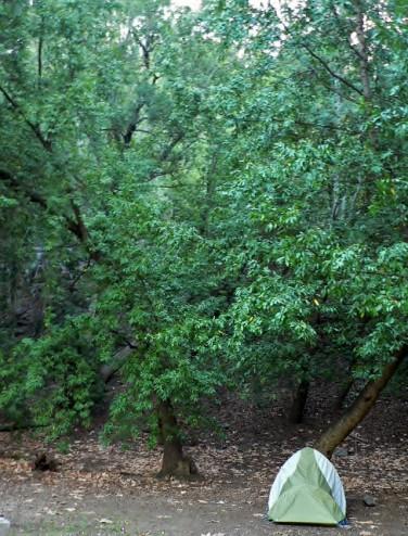 Campsite at Pfeiffer Big Sur State Park