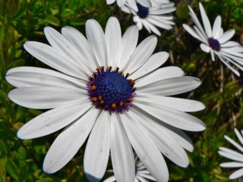 Big Sur Flowers