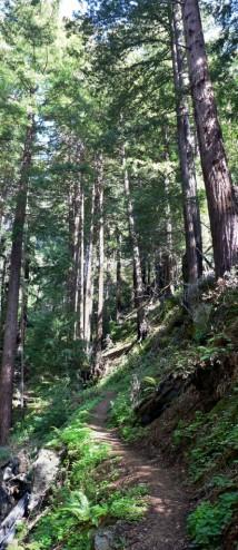 Tanbark Trail Big Sur