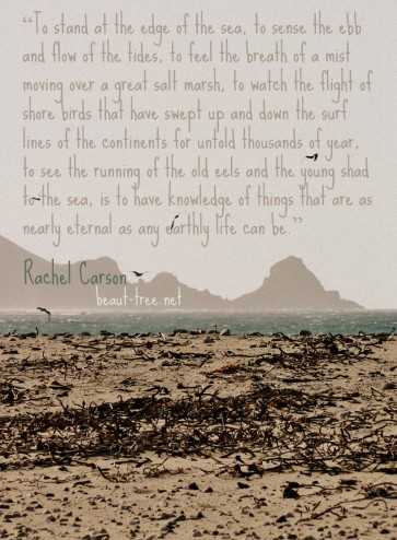 To stand at the edge of the sea... is to have knowledge of things that are as nearly eternal as any earthly life can be - Rachel Carson