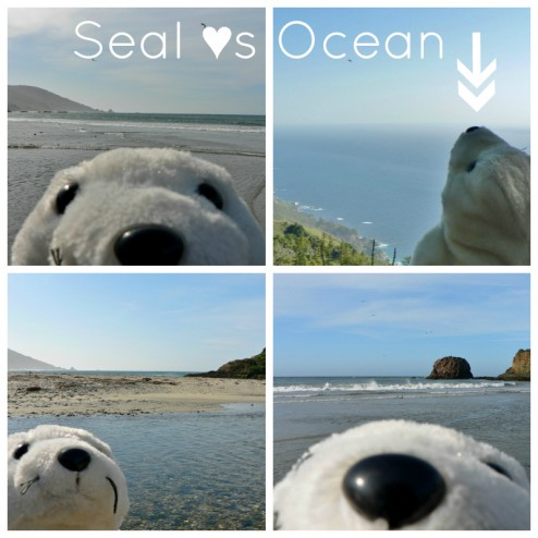 Seal hearts the Ocean