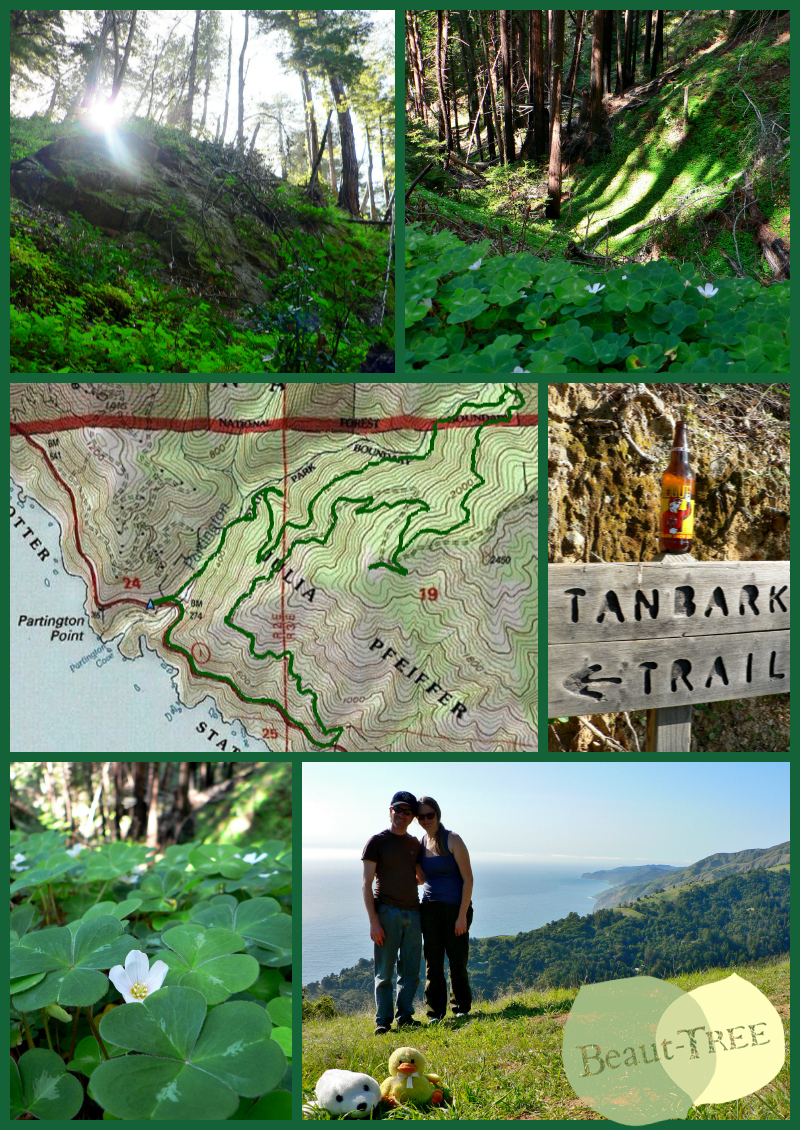 Hiking on the Tanbark Trail in Big Sur - the ultimate St Patties Hike with shamrocks, redwoods, & ocean views