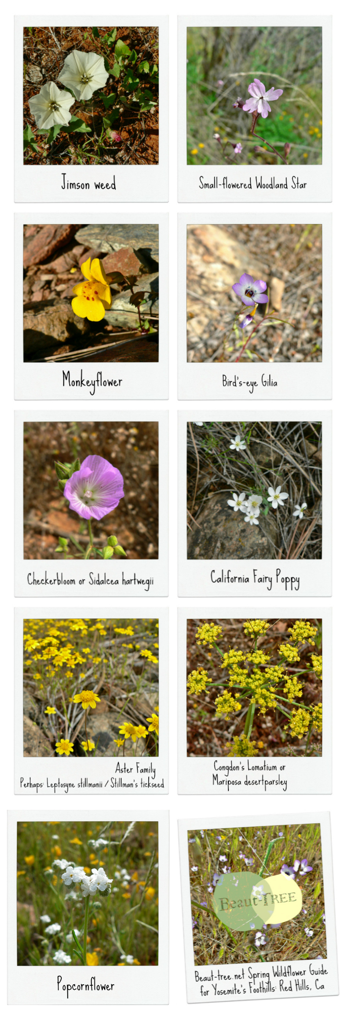 Guide to the Wildflowers in Red Hills CA