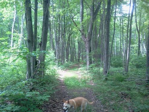 Algonquin Trail, Negwegon State Park