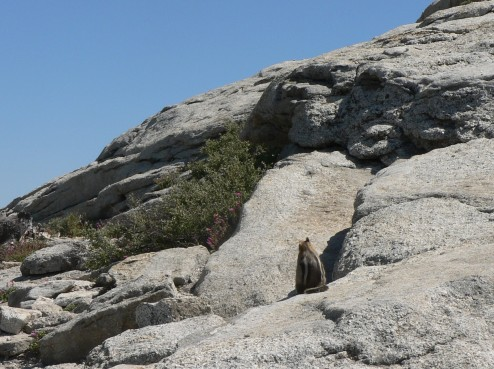 Sentinel Dome Buddha, Yosemite