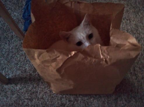 Evacuation Cat