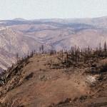 Rim Fire Report