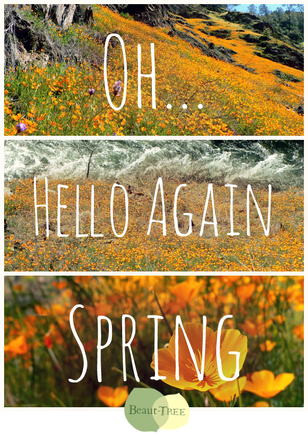 Oh Hello Again Spring