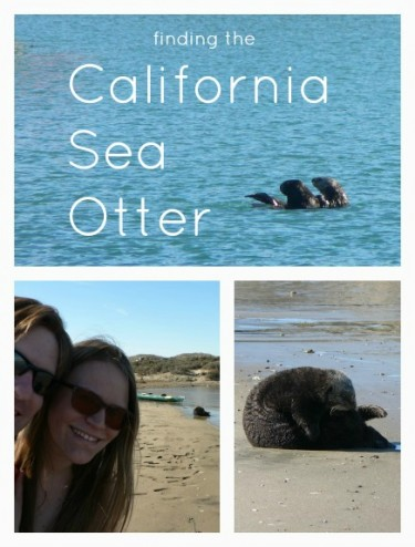 Where to Spot a California Sea Otter