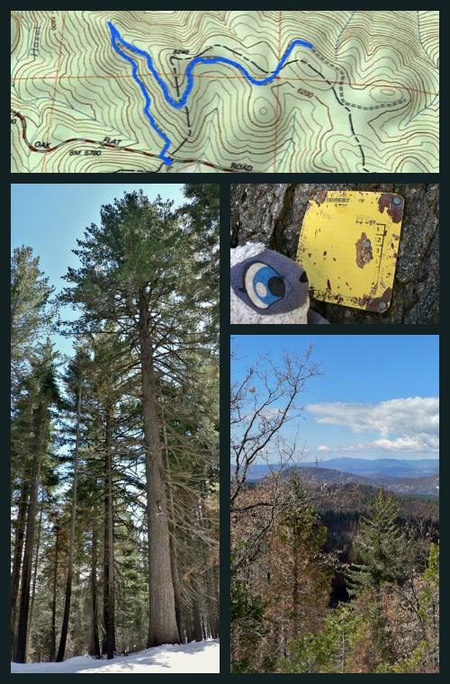 Map of Rockefeller Grove of Sugar Pines, Yosemite