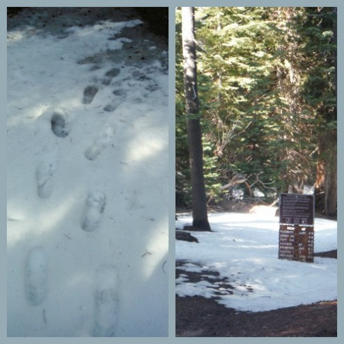 McGurk Meadow trail in April