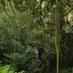 Mossy overhang