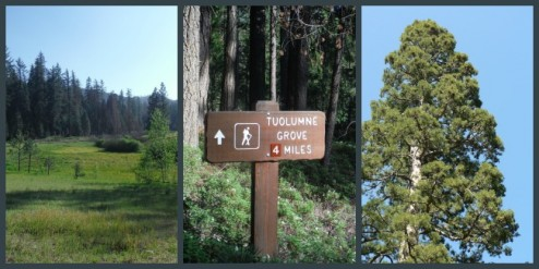 Hiking from Hodgon Meadow to Tuolume Grove, Yosemite