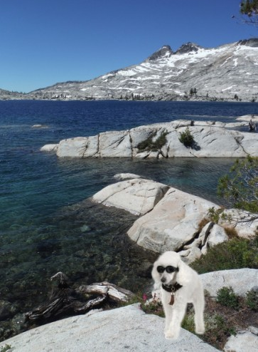 Let's talk about the number of Poodles at Lake Aloha, Desolation Wilderness Tahoe