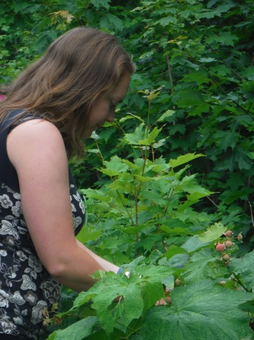 Thimbleberry Picking