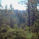 The Stanislaus National Forest is OPEN!