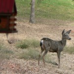 True Story: Deer Love Pine Mountain Lake