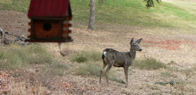 True Story: Deer Love Pine Mountain Lake
