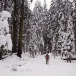 Skiing the El Portal Fire - Snow, Fire, & Historic Yosemite Railroads