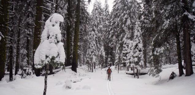 Skiing the El Portal Fire - Snow, Fire, & Historic Yosemite Railroads