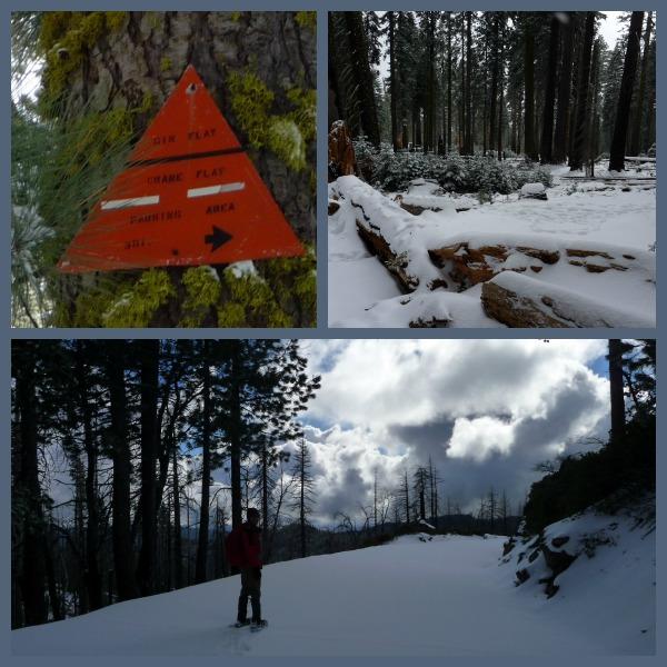 Gin Flat Snowshow, Yosemite