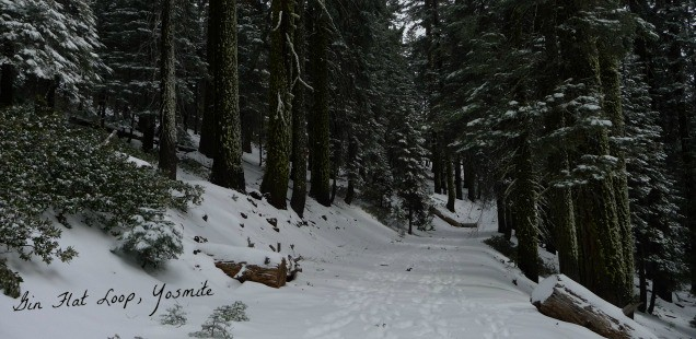 Gin Flat Loop, Yosemite: Snowshoeing & Snow Survey Stations